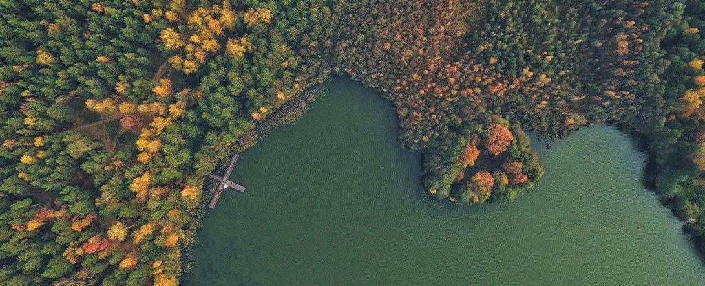 Художественная съёмка: Озеро, Осень,  - Фото с квадрокоптера