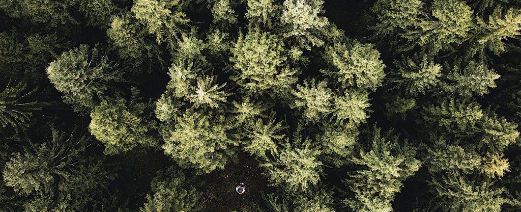 Лес., Белые Столбы - Фото с квадрокоптера