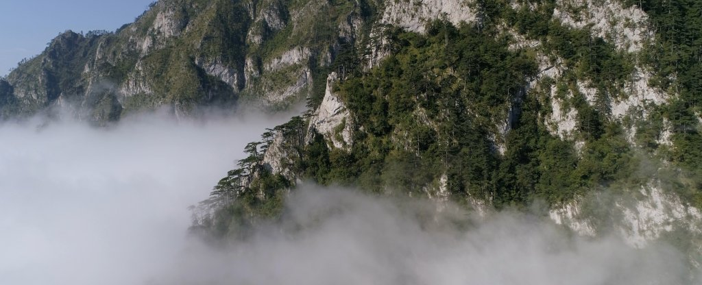 Сосны над облаками,  - Фото с квадрокоптера